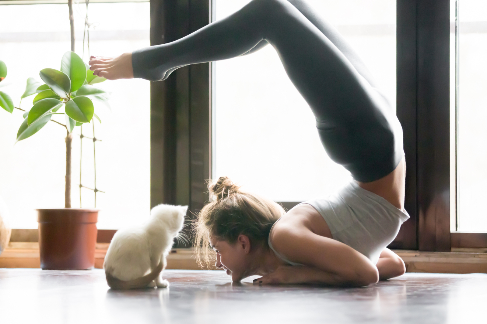 Yoga Practice with Cat | Yoga for Beginners: A Definitive Guide If You're New To Yoga